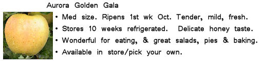 Image and info about Aurora Golden Gala apples