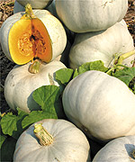 Ghost pumpkins – a popular decoration and good to eat!