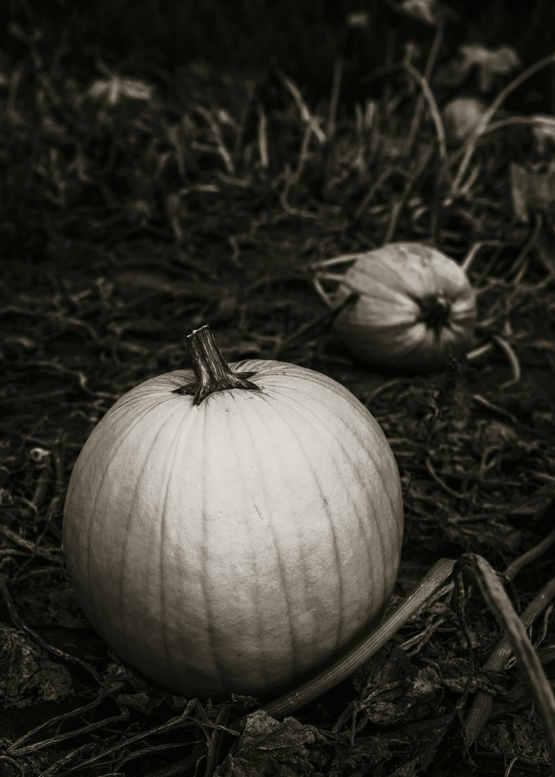 image black and white pumpkins